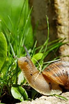 지상에 크롤링하는 큰 민달팽이의 근접 촬영 샷
