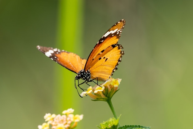 Снимок крупным планом маленькой бабочки, сидящей на полевом цветке