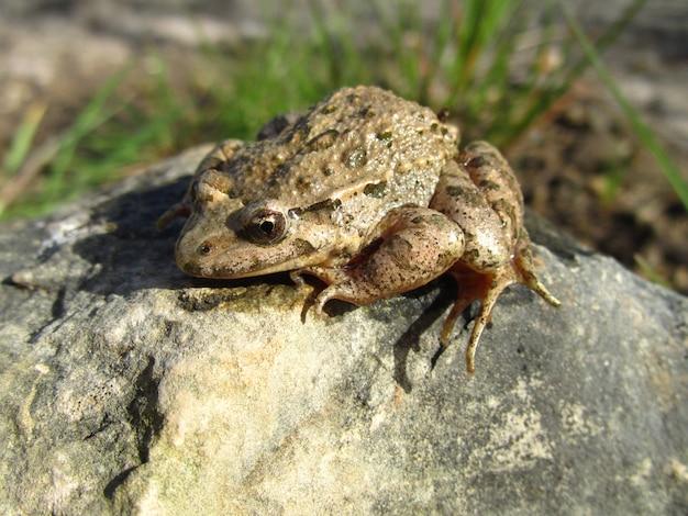 바위에 잎 옆에 지중해 그린 개구리의 근접 촬영 샷