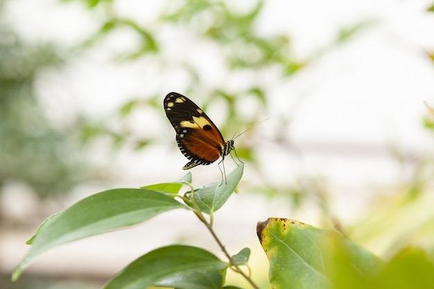 Снимок крупным планом бабочки монарх на зеленом листе с фоном боке