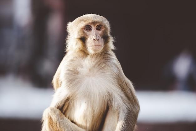 야외에서 앉아 원숭이의 근접 촬영 샷