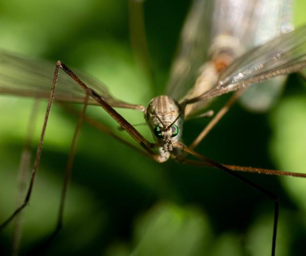 Снимок крупным планом комара в окружении зелени