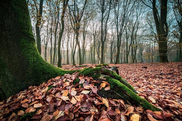 秋の森と葉を持つ苔むした木の幹のクローズアップショット