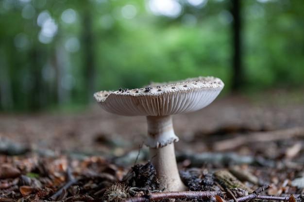 Снимок крупным планом гриба, растущего в лесу