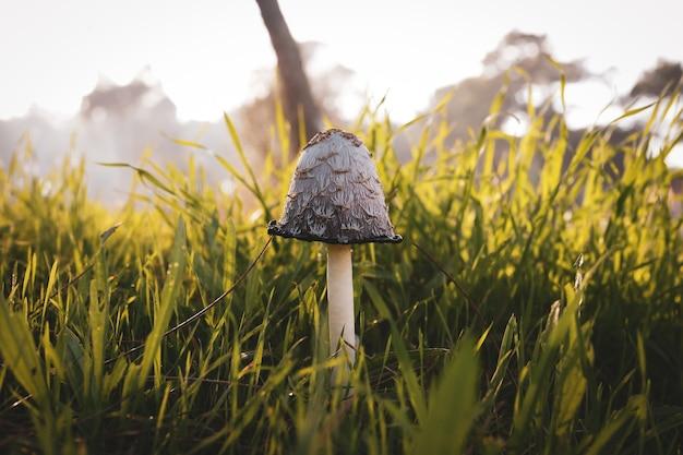 들판에 있는 버섯의 근접 촬영 샷