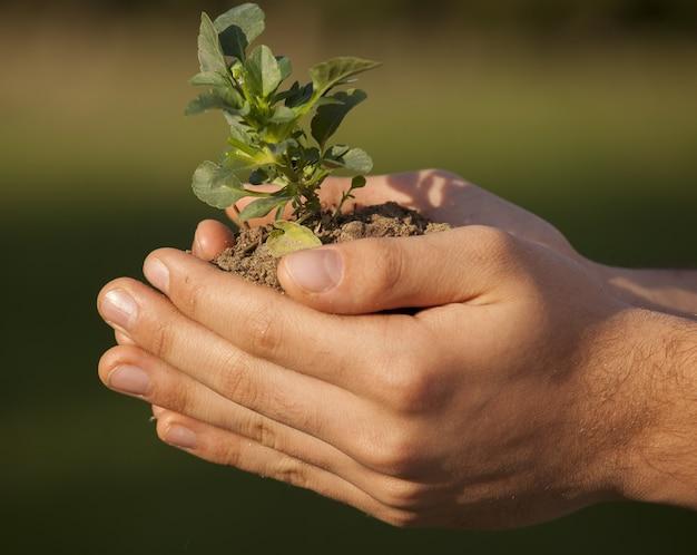 식물을 들고 사람 손의 근접 촬영 샷
