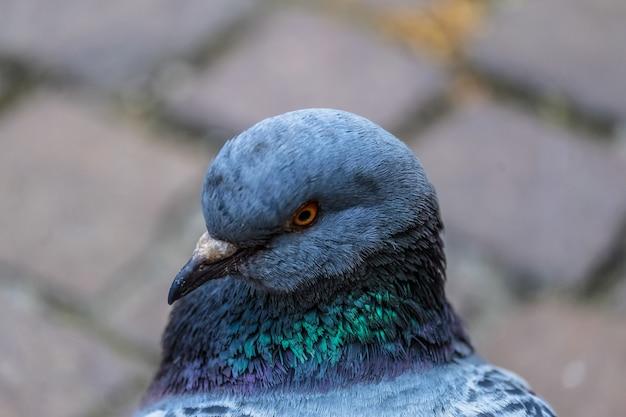 Макрофотография выстрел голубя