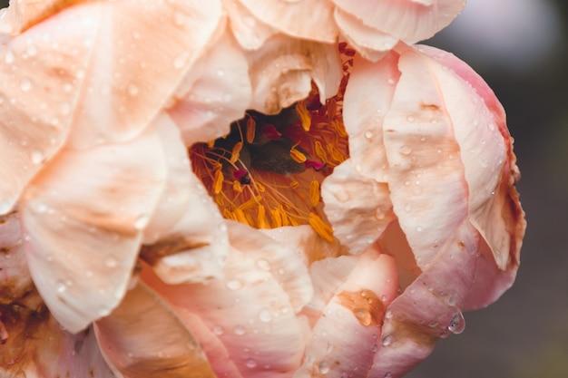 その上に水滴とピンクの花のクローズアップショット