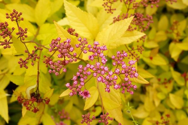 노란 잎 핑크 꽃의 근접 촬영 샷