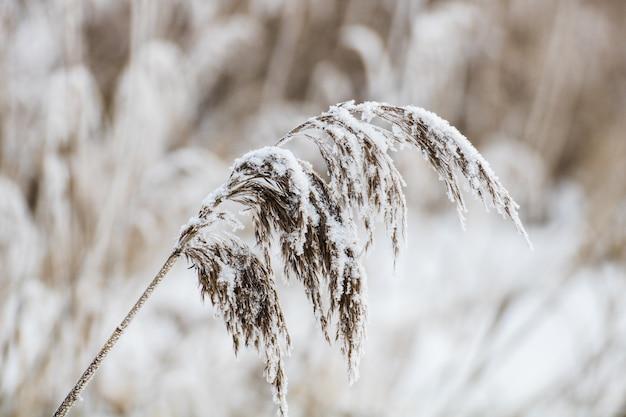 雪で覆われた植物のクローズアップショット