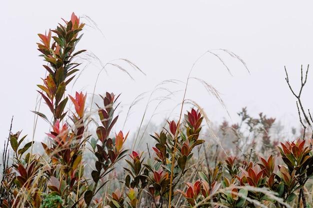 緑と赤の葉を持つ植物のクローズアップショット