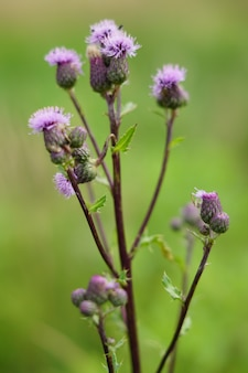 Снимок крупным планом фиолетового и зеленого цветка в дневное время