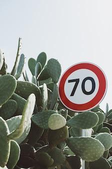 バニーの耳のサボテンの植物に囲まれた道路標識のクローズアップショット