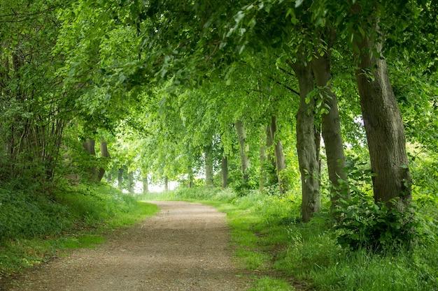 森の中の道路のクローズアップショット