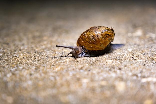 해변에서 바다 달팽이의 근접 촬영 샷