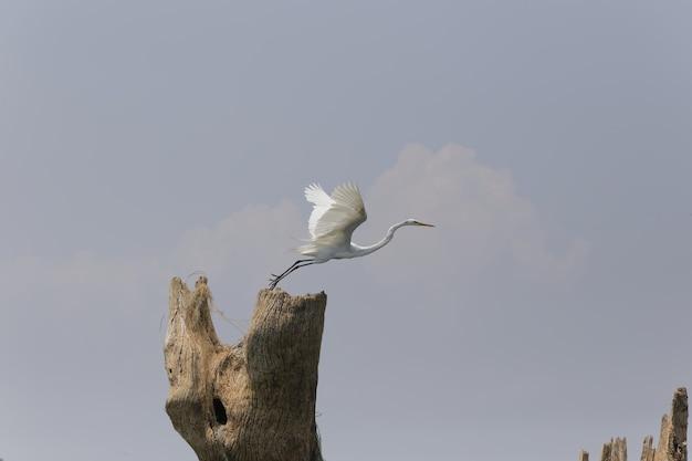 Снимок крупным планом одиночной олуши, готовой к полету с ясным небом