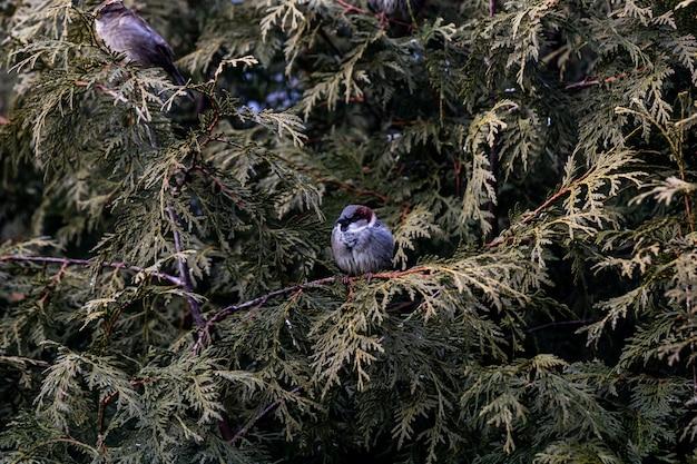 Снимок крупным планом маленькой птички, сидящей на ветке