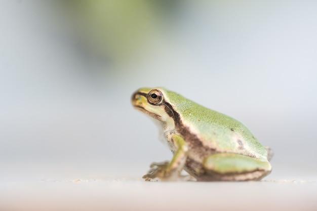 Снимок крупным планом маленькой лягушки