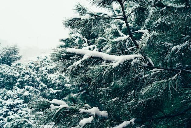 눈 덮인 소나무의 근접 촬영 샷