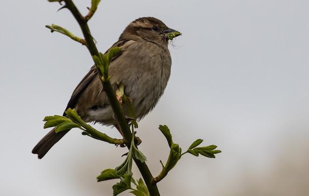 나뭇가지에 앉은 참새의 근접 촬영