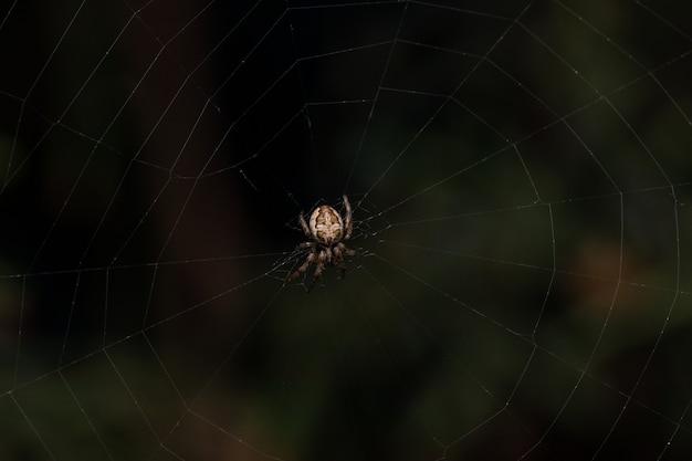 웹에 거미의 근접 촬영 샷