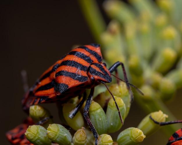 Снимок крупным планом вонючего жука с полосами на растении
