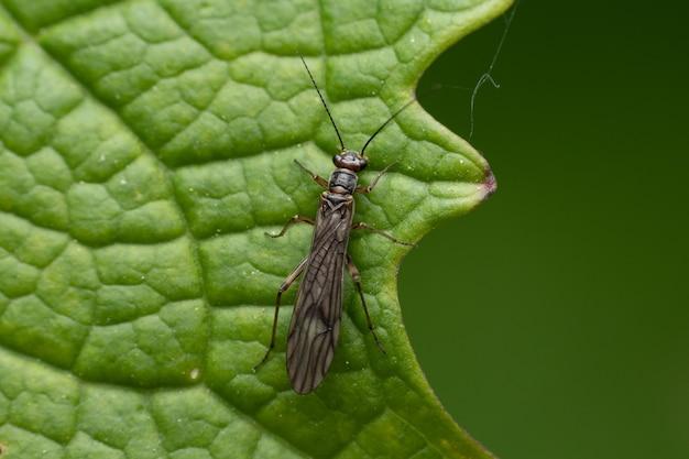 녹색 잎에 총채벌레의 근접 촬영 샷