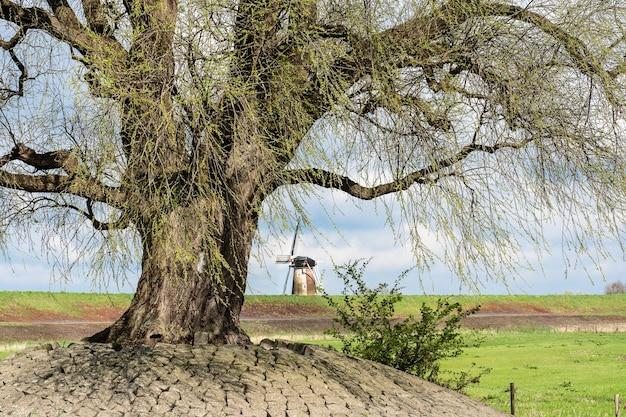 日中の緑の野原の木のクローズアップショット