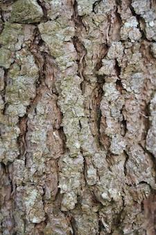 松の木の幹のクローズアップショット