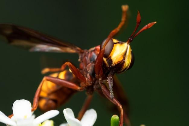 흰 꽃에 말벌의 근접 촬영 샷
