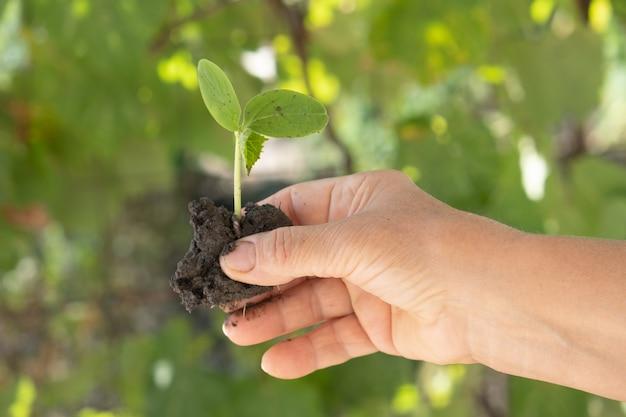 Снимок крупным планом женщины, держащей росток зеленого растения ее руки.