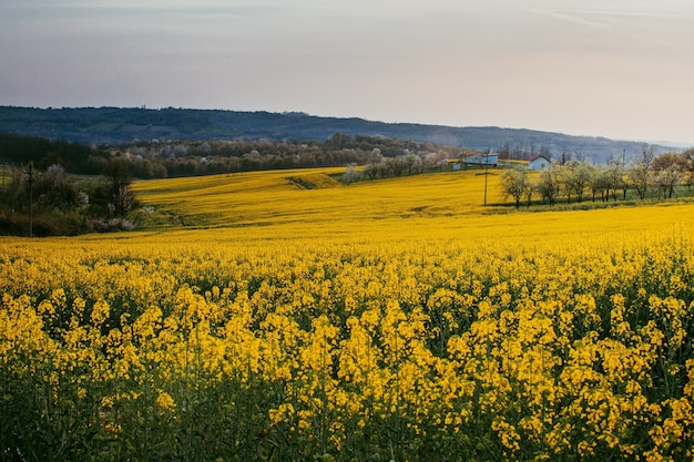 노란색 꽃밭의 근접 촬영 샷