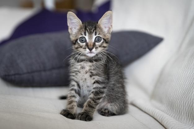 Снимок очаровательного котенка, сидящего на диване крупным планом