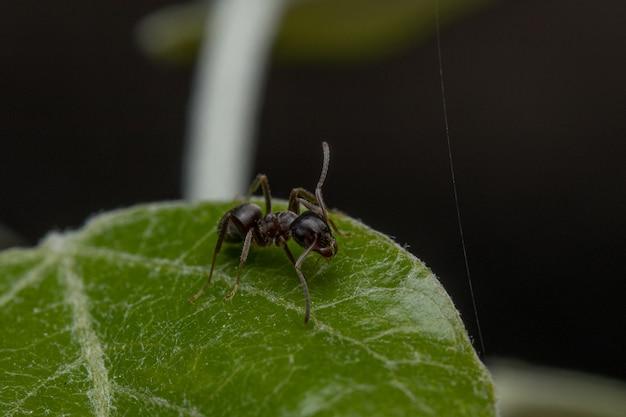 녹색 잎에 개미의 근접 촬영 샷