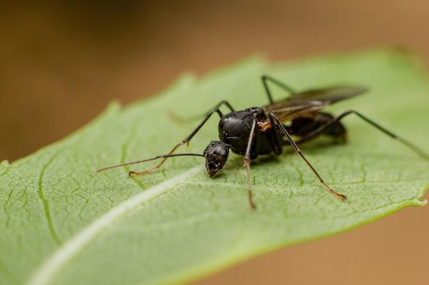 Крупным планом выстрел из насекомого на зеленом листе