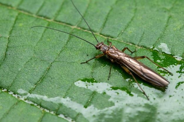 잎에 oedemeridae의 근접 촬영 샷
