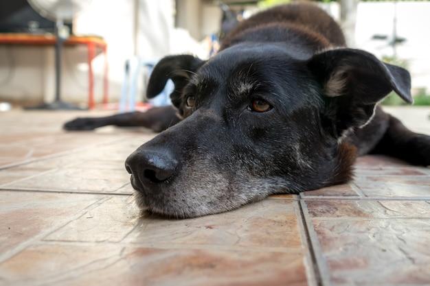 タイル張りの表面で休んでいる老犬のクローズアップショット