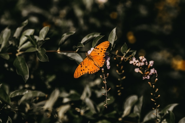 Крупным планом выстрел оранжевой бабочки на цветке