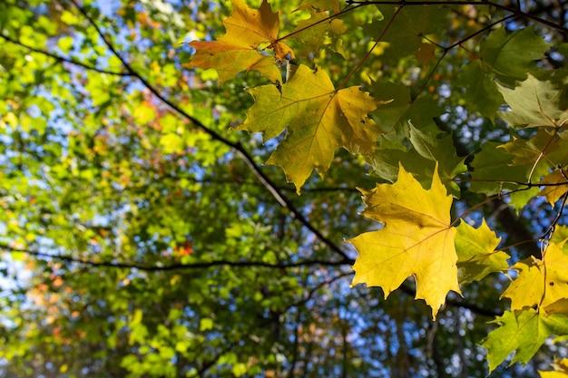 Крупным планом выстрел из осенних листьев на ветвях
