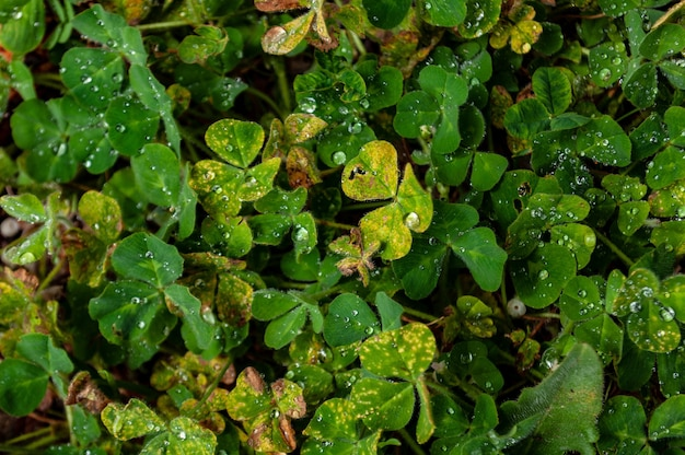 Снимок крупным планом красивых зеленых и желтых листьев, покрытых каплями росы