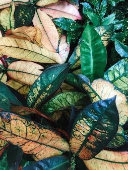배경 또는 벽지 숲의 아름다운 녹지의 근접 촬영 샷