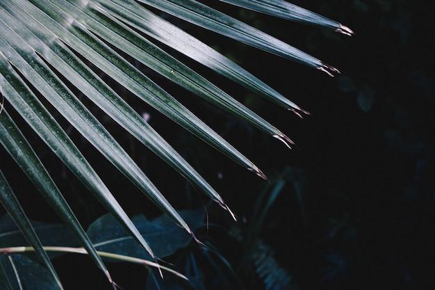 이국적인 열대 식물의 아름다운 뾰족한 잎의 근접 촬영 샷
