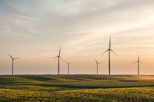 Снимок крупным планом красивых подсолнухов и ветряных турбин в поле