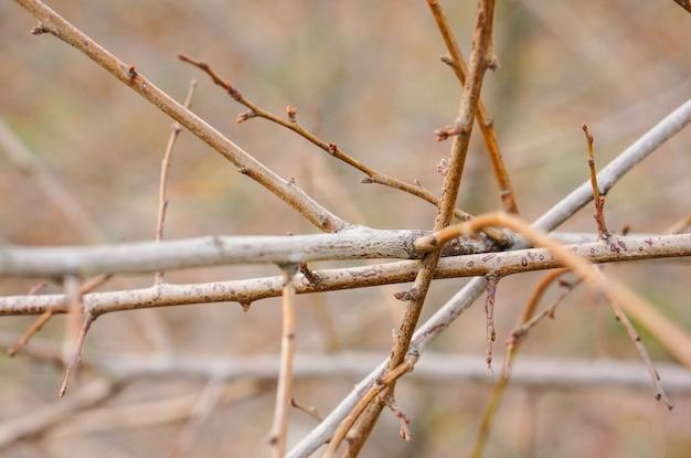 もつれた木の枝のクローズアップショット
