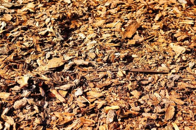 昼間の地面に茶色の葉のクローズアップショット