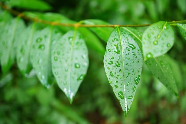 Снимок крупным планом свежих зеленых листьев, покрытых каплями росы