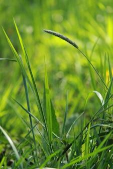 녹색 신선한 잔디와 식물의 근접 촬영 샷