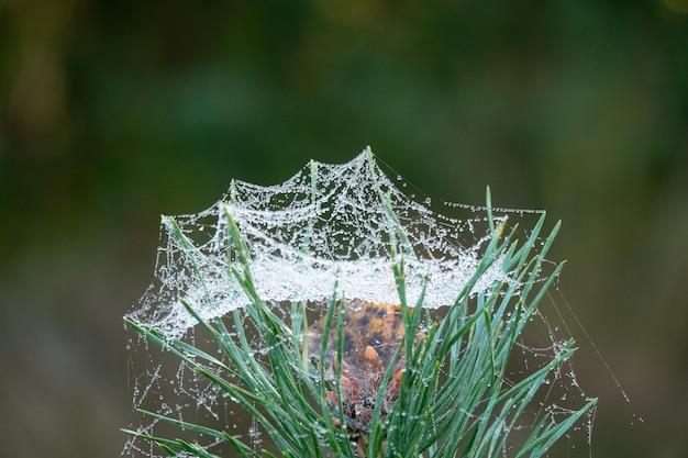 ぬれたクモの巣で覆われた緑の草のクローズアップショット