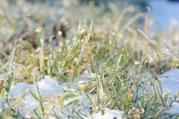 雪の上に成長している緑の草のクローズアップショット