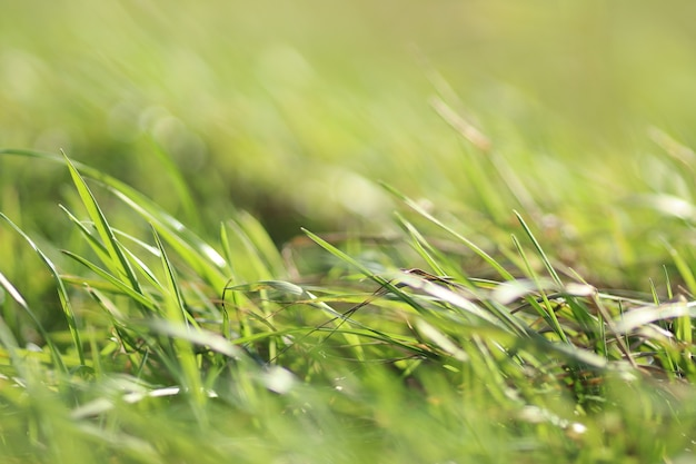 Крупным планом выстрел из зеленой травы